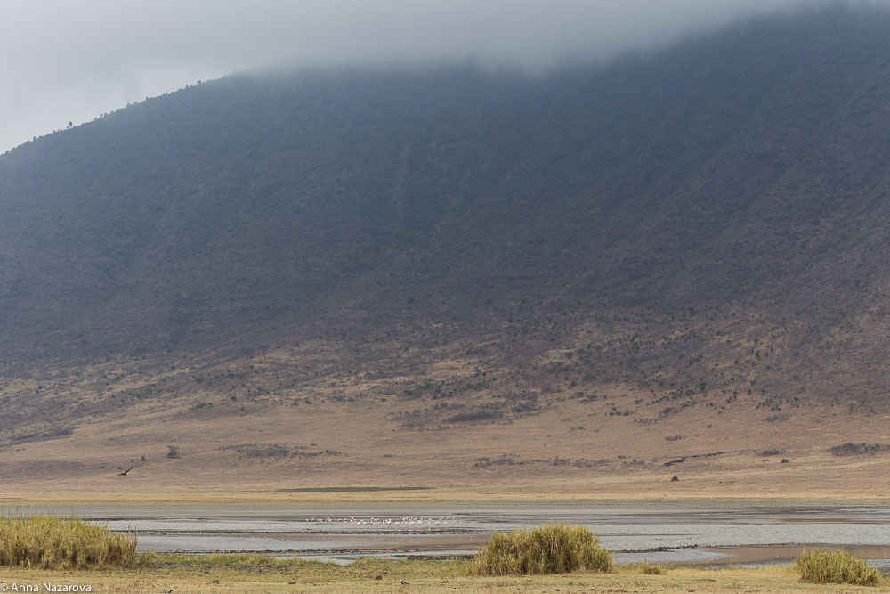 pink flamingoes in Ngorongoro