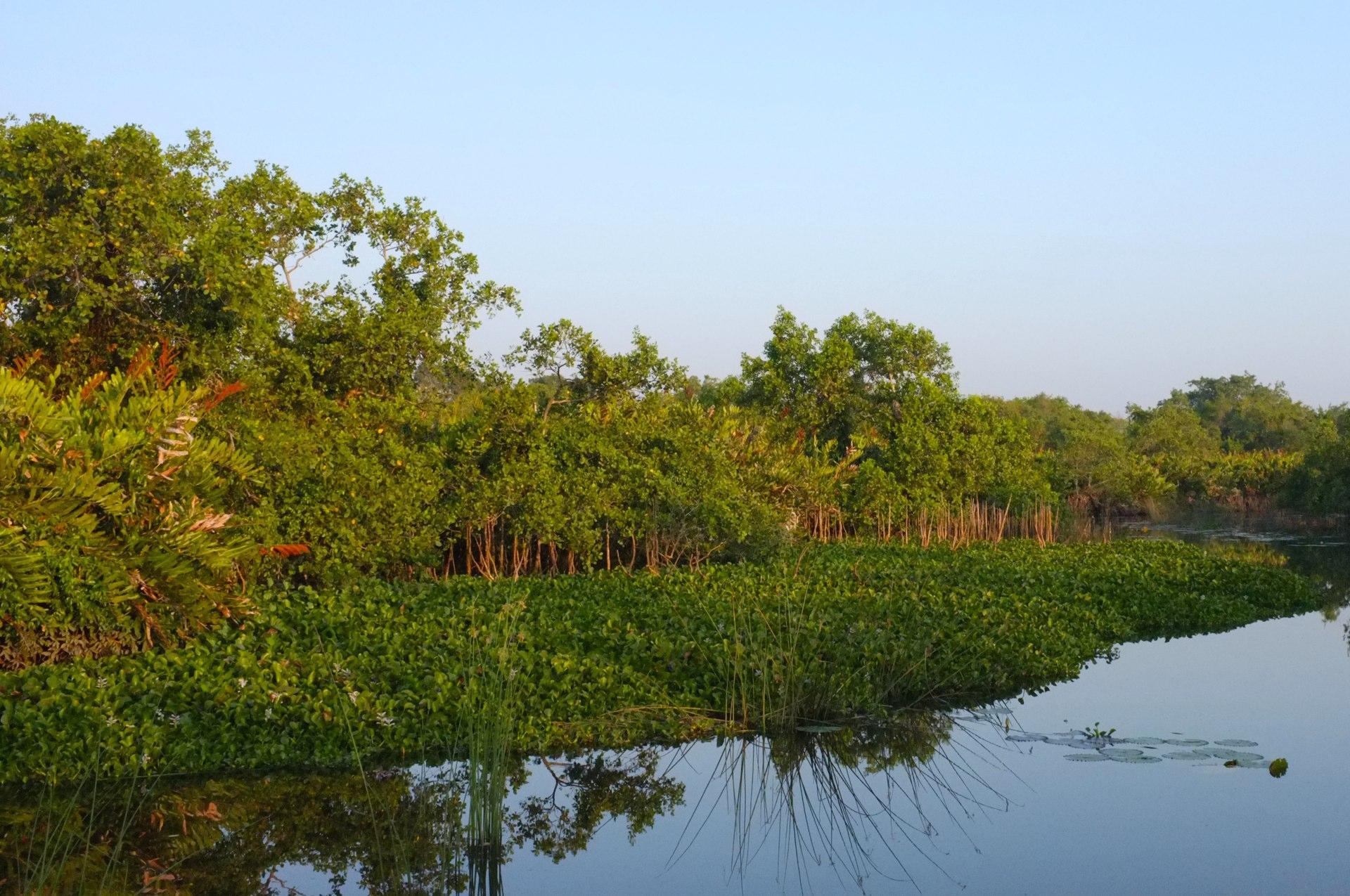 Fauna in Tangalle lagoon