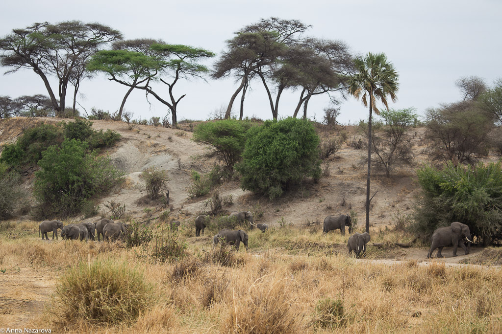 Landscape with elephants in Tarangire National Park