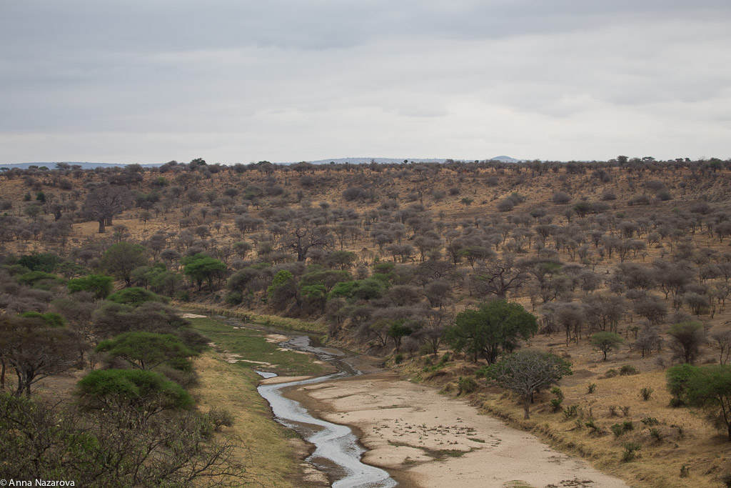 River landscape in Tarangire National Park