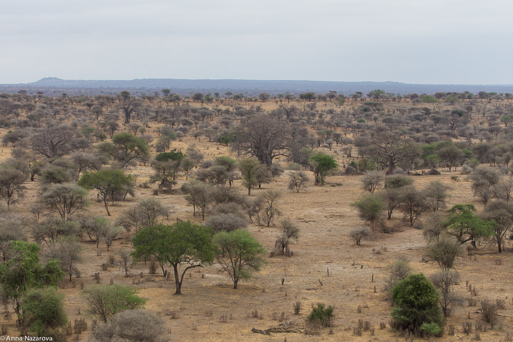 Landscape in Tarangire National Park