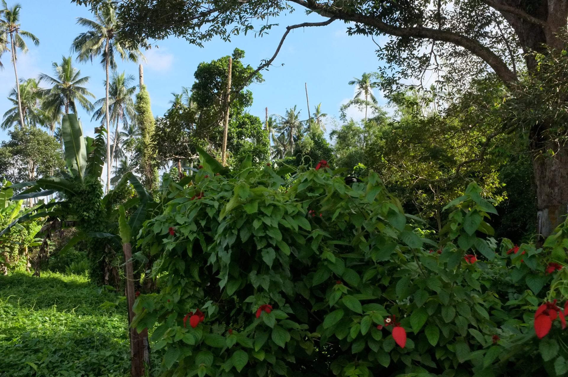 Tioman rainforest