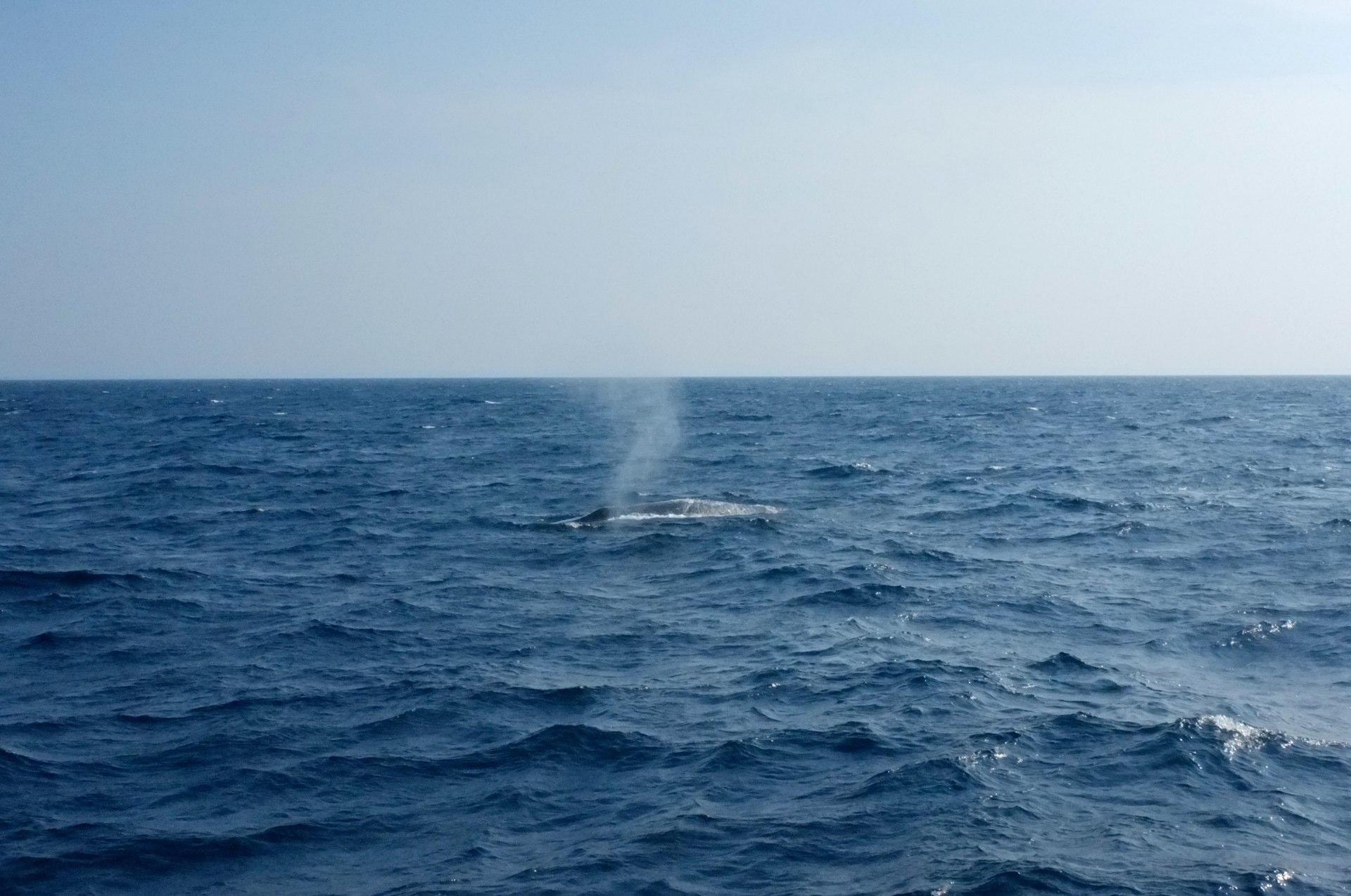 whales in Mirissa